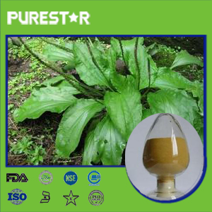 Asiatic Plantain Extract