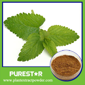 Lemon Balm Extract,Melissa Officinalis Extract