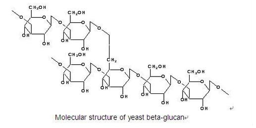Skin yeast beta glucan penetration